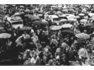 Do 30 000 ljudi na traberhofu kod Rosenheima pokraj Münchena u rujnu 1949. Tu su se dogodila velika masovna iscjeljenja na daljinu.